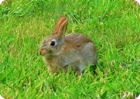comment chasser un lapin du jardin