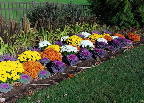 ornamental cabbage annual or perennial 5 things to know about flowering kale and cabbage garden