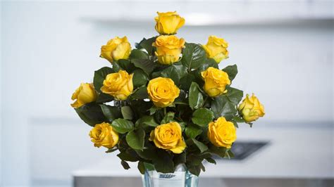 themes yellow rose yellow roses spring in the air