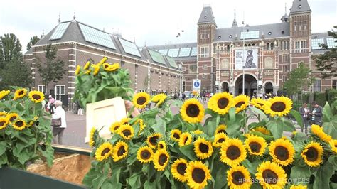 museum amsterdam youtube labyrint of sunflowers van gogh museum amsterdam youtube