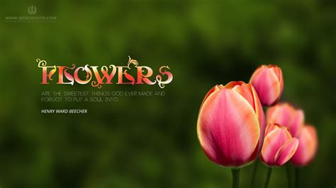win with flower windows 8 wallpaper collection of best window 8