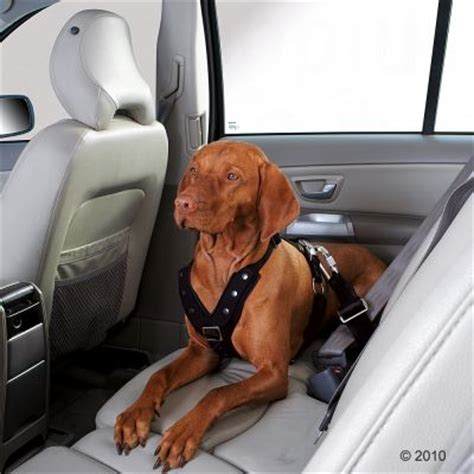 hunter comfort hunter autosicherheitsgeschirr easy comfort g 252 nstig bei