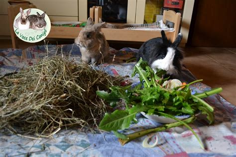 la voce dei conigli alimentazione corretta alimentazione da la voce dei conigli