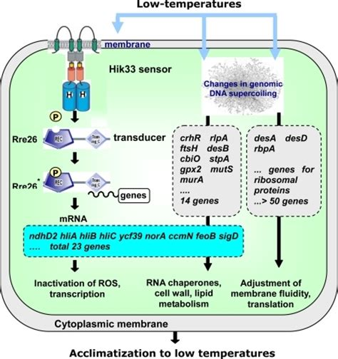 stress biology of cyanobacteria molecular mechanisms to cellular responses books f8 sensors 10 02386 stress sensors and signal transducers