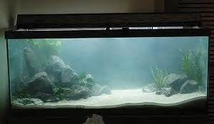 fish tank cloudy cloudy tank with in 2 days of water change 2017 fish tank maintenance