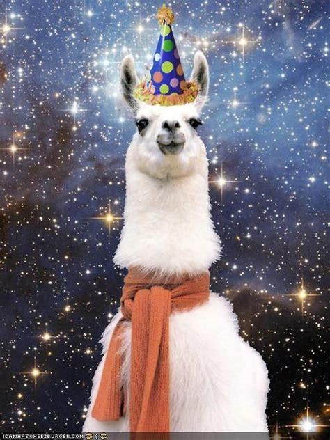 Llama Birthday Meme - happy happy llama coolstuff pinterest