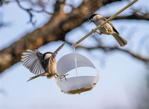 birdfreeder a flat pack bird feeder that pops up in a