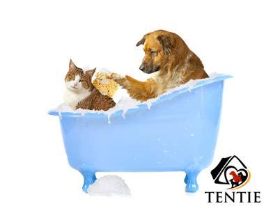 wie badet seinen hund richtig tentie de