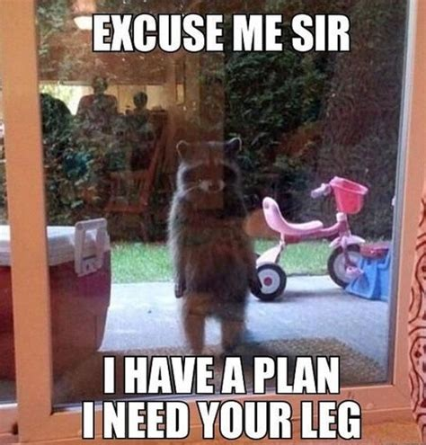 Guardians Of The Galaxy Memes - excuse me sir i have a plan i need your leg meme collection