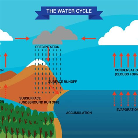 diagram of water cycle for free vector water cycle diagram vector 30682 my graphic