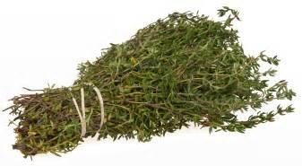 Thyme secrets of culinary herbs