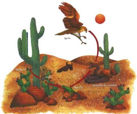 cadena alimenticia del desierto imagui - Cadenas Alimenticias Del Desierto