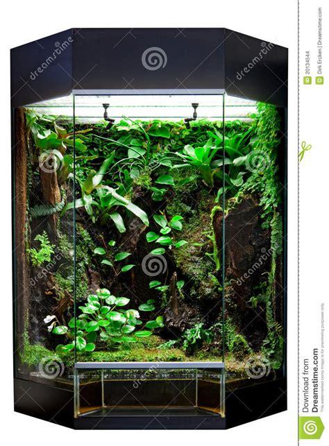 terrarium  tropical rainforest pet stock images image
