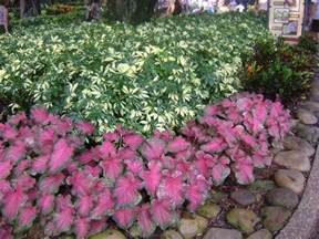 groundcover plants for tampa bay in apollo beach riverview