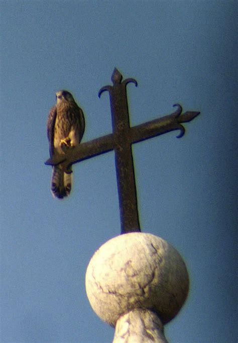 uccelli non volanti un mondo di forme e colori volanti nelle ricerche di