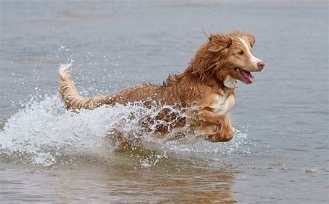 most trainable dogs the 10 most trainable breeds ilovedogsandpuppies