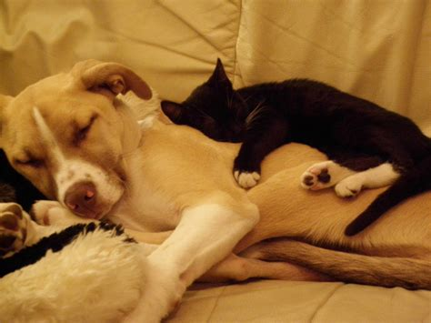 how often should puppies sleep cats and dogs sleeping together 2017 2018 best cars reviews