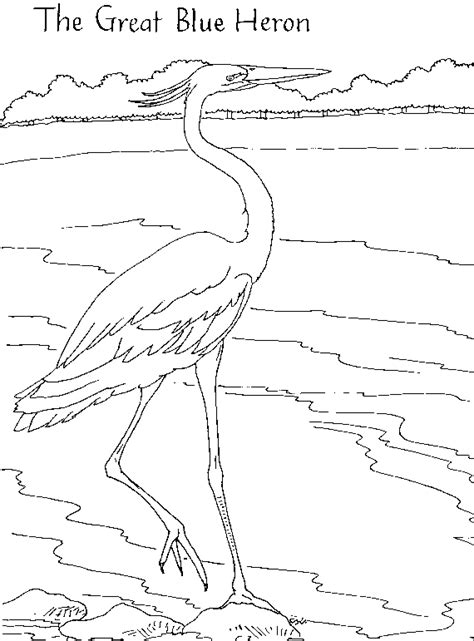 great blue heron coloring page great blue heron free