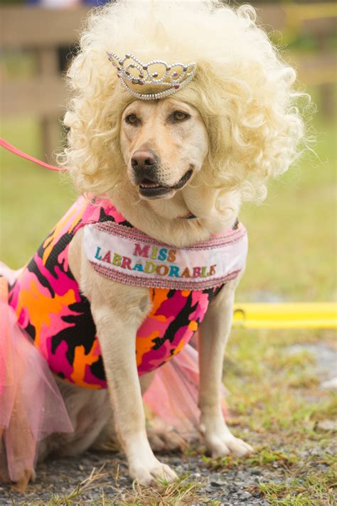 dogs day out pooch palooza delmarva unleashed holds s day out at frontier town delmarvalife
