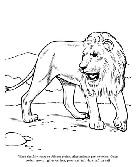lion pride coloring pages african lion coloring page pride of lions coloring page