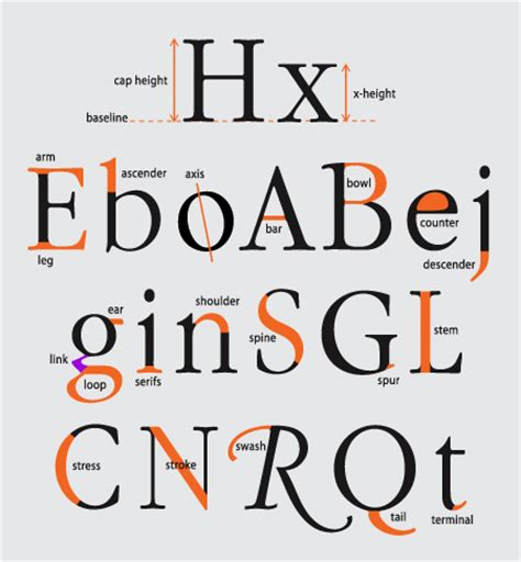 typography letter parts the anatomy of a character the type studio