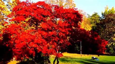european colors autumn colors in europe