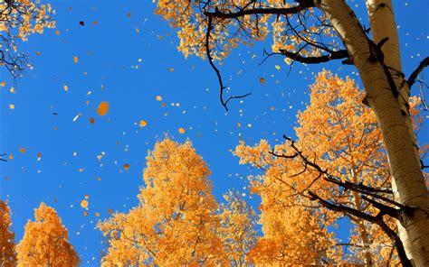 Leaf Fell Me Blue 秋天唯美的落叶风景经典电脑清晰背景图片 丫丫壁纸网