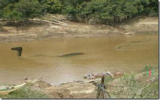film ular naga dtiskandarz ular naga ada di sungai mahakam
