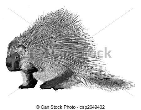 porcupine diagram porcupine erethizon dorsatum ink and pencil drawing clip