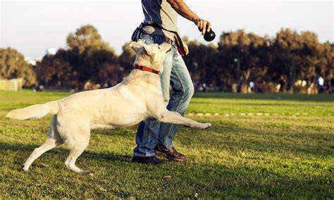 welcher wagen passt zu mir welcher hund passt zu mir erfahren sie gleich im beitrag