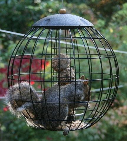 tyual: homemade squirrel proof bird feeder plans here