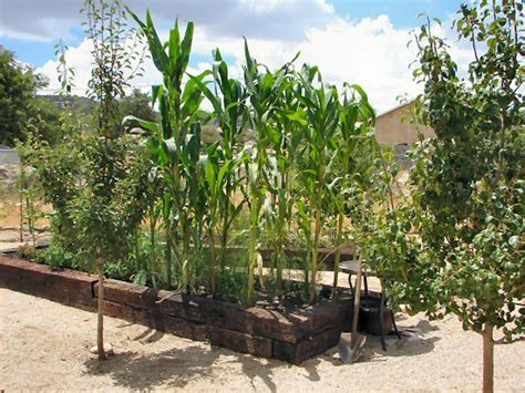Gardening In Arizona Arizona Raised Bed Vegetable Fruit Tree Gardens Arizona