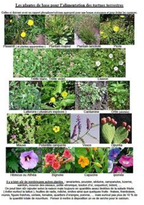 Liste Des Plantes Toxiques Pour Les Poules by Les 14 Meilleures Images Du Tableau Tortue Sur