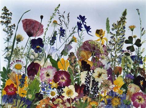 quadri con fiori pressati clarart l angolo delle fantasie creare con i fiori pressati