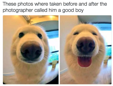 Gay Dog Meme - 12 dog memes that will make your day viral slacker
