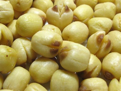 Unpolised Rice With Lotus Seed health matters evaluation of the quality and wonders of lotus seed for the health a mixture