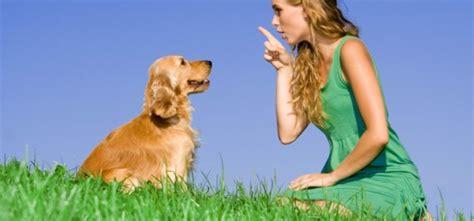 how to teach a pug tricks can you teach an new tricks