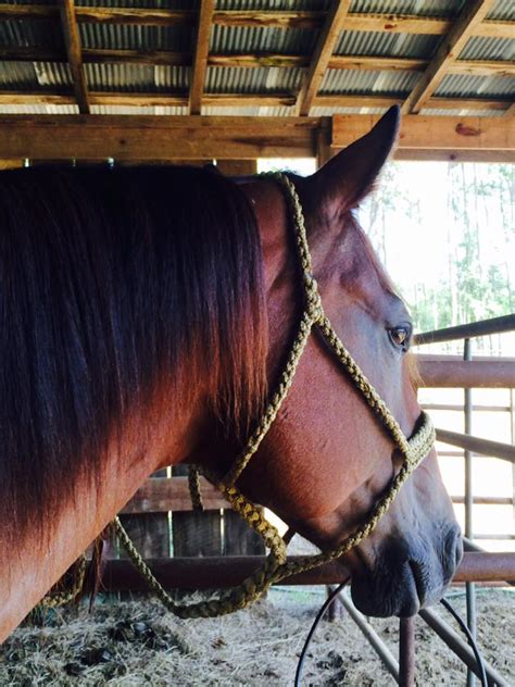 diamond bar  braided mule tape halters  tack