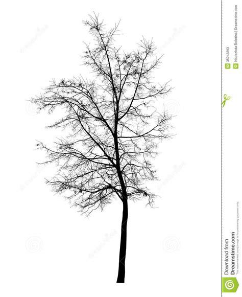 Bare Tree Isolated White Stock Photos Image 35048393