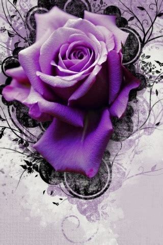 Theme Rose Iphone | purple rose iphone wallpapers iphone themes iphone games
