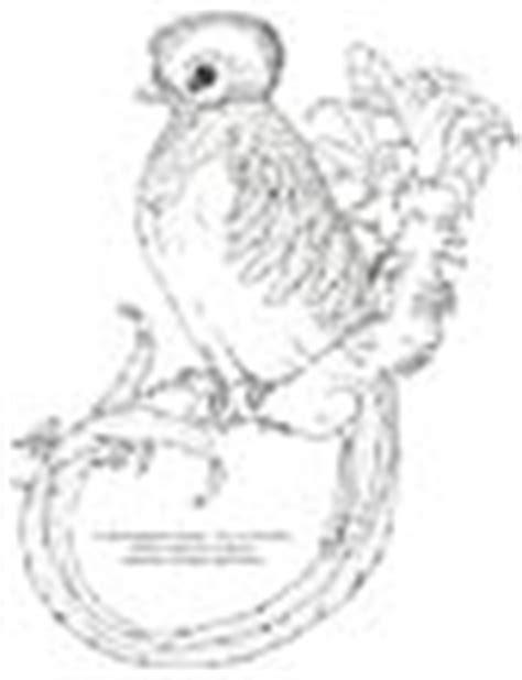 quetzal bird coloring page quetzal animals town