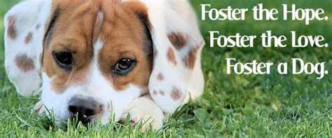 foster puppies why foster a because house adoptions