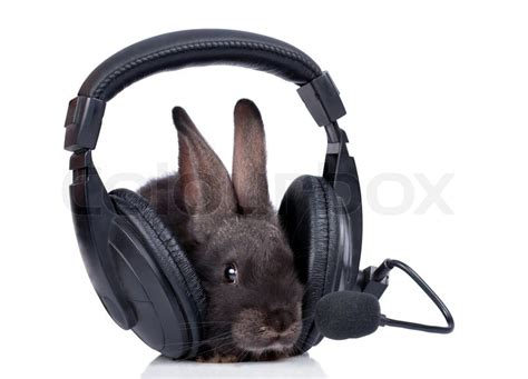 a rabbit and headphone isolated on white stock photo