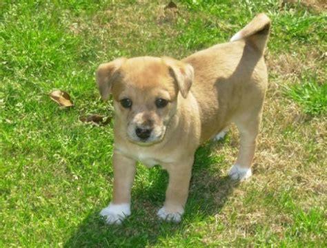 cutest mixed breeds mixed breeds