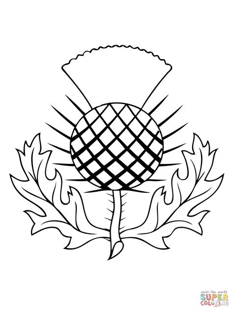 the thistle of scotland coloring page free printable