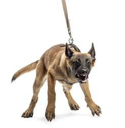a with leash reactivity mission valley news