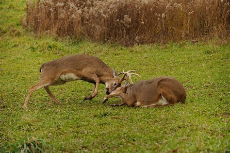 What Can I Feed Deer In My Backyard 28 Images What Can What To Feed Deer In Backyard