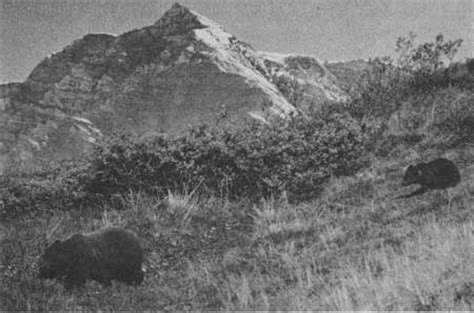 the grizzlies of mount mckinley classic reprint books the grizzlies of mount mckinley chapter 2