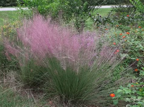 gulf muhly ryno lawn care llc