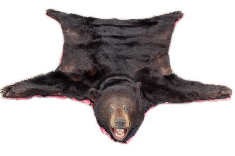 bearskin rug for sale beautiful and clean skin rug for sale at 1stdibs